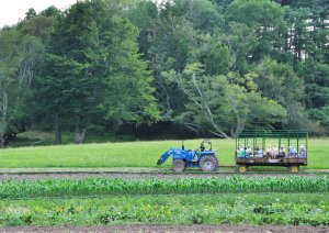 Cruising around the fields in the hay wagon