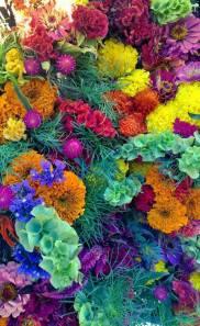 PYO flowers2