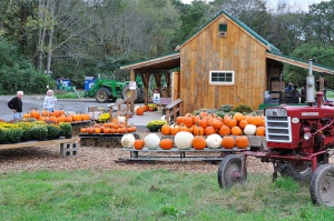 Farmstand with pumpkins and an old tractor