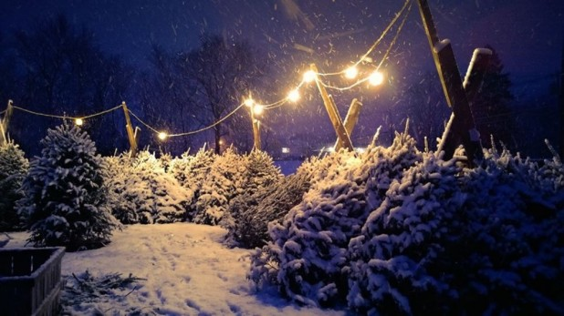 cropped-christmas-tree-photo2.jpg