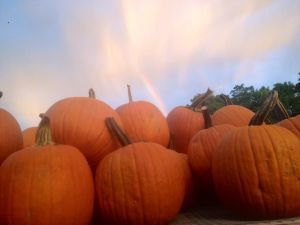 rainbow_pumpkins