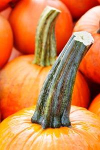 pumpkins2012-carol-lundeen.jpg