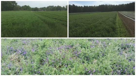 CoverCrops