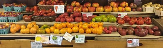 Rainbow of organic tomato varieties on display in the farmstand.