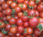 Fresh and delicious organic cherry tomatoes.