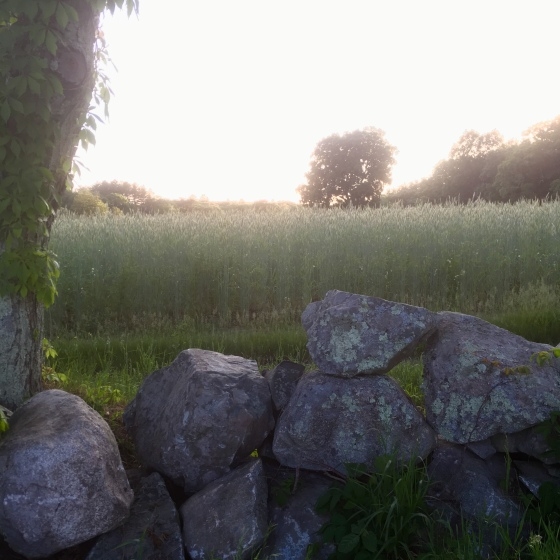 PO field stone wall sunset