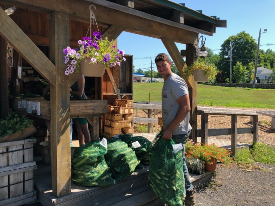 gennaro hauling corn to farmstand