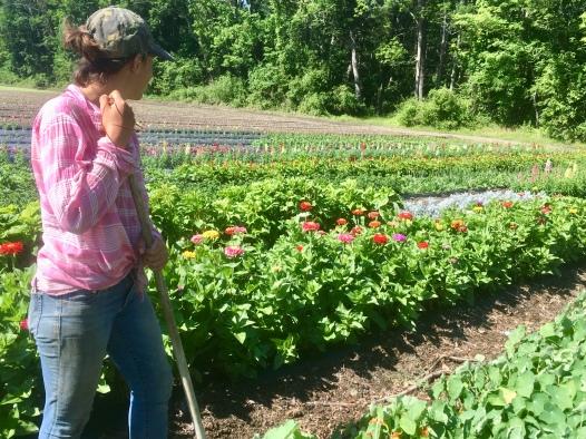 jen surveying flower patch