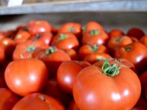 regular red tomato display