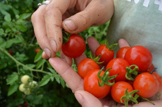 handful of red cherry tomatoes