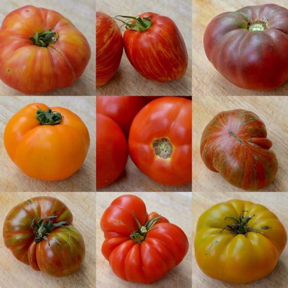 heirloom tomato layout