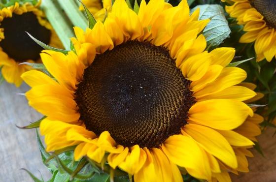 sunflower closeup wooden pallet