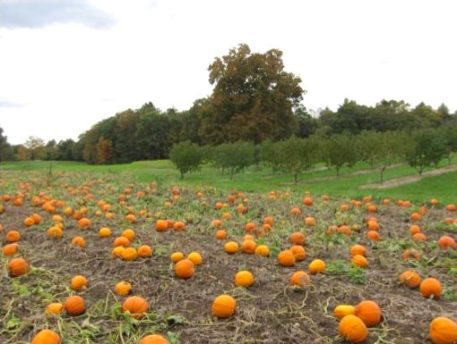 pyo pumpkin field jen jasmin