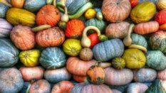 abundance-agriculture-crop-157310