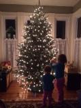 O'Dwyer tree 2015