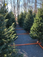 christmas tree forest farmstand