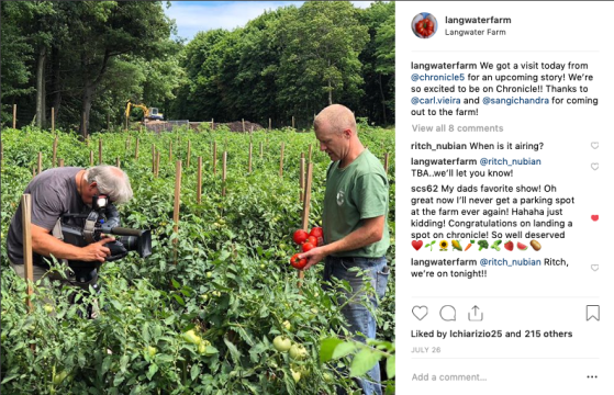 insta chronicle filming tomato field