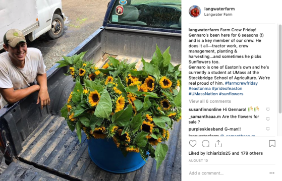insta gennaro sunflowers truck bed