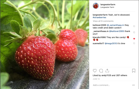 insta strawberry porn