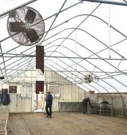 ben liz cleaning greenhouse spring