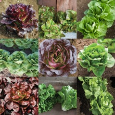 johnnys lettuce layout