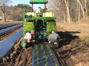 Liz driving transplanter