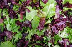 Fresh mixed salad field greens piled closeup view