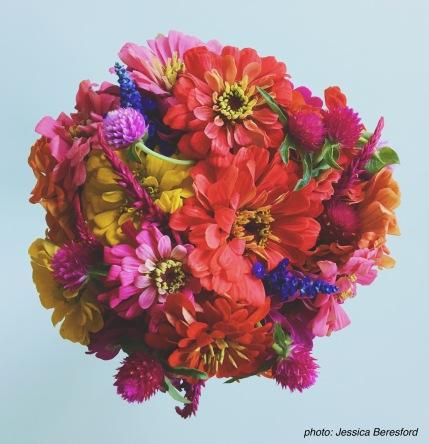 flower csa share zinnias gomphrena salvia jessica beresford