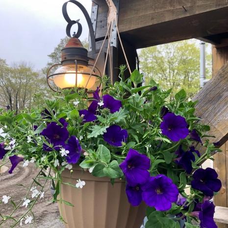 fs petunia hanging basket lantern