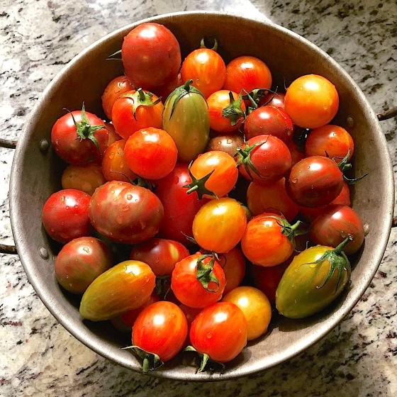 artisan tomatoes in bowl
