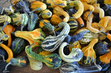 autumn wings gourds fall