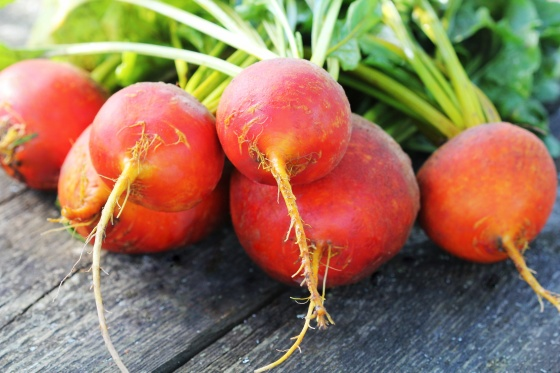 Raw organic golden beets on wooden background