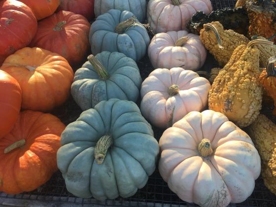 cinderella blue pink pumpkins
