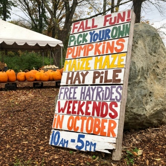 fall fun sign