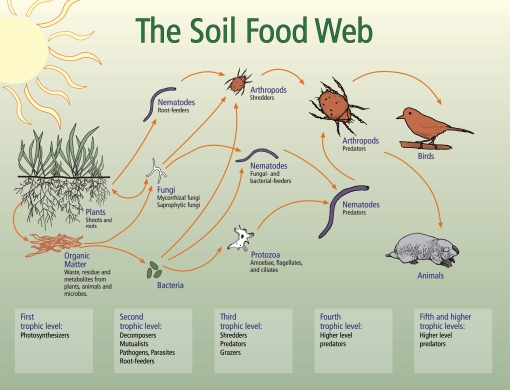 soil food web graphic