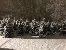 snowy christmas tree landscape