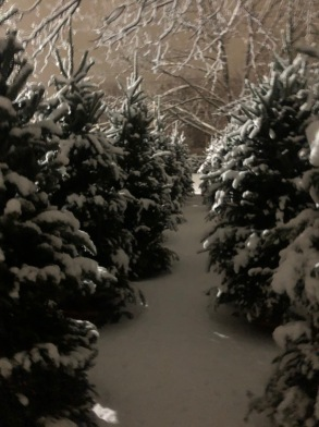 snowy christmas trees down the row