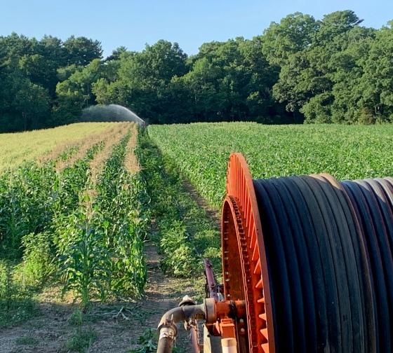 traveler gun irrigating corn field